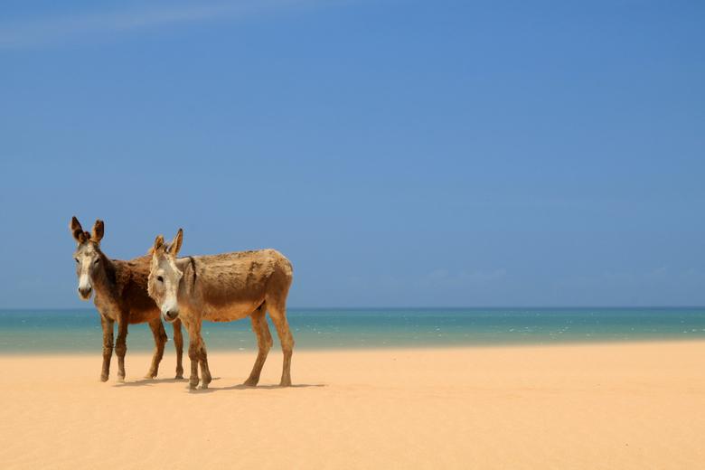Ezels in de woestijn