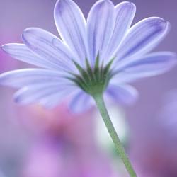 Soft pastel beauty
