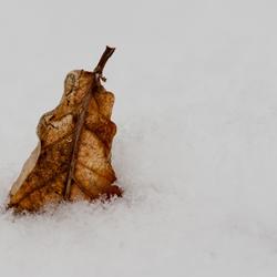 Winter & Herfst