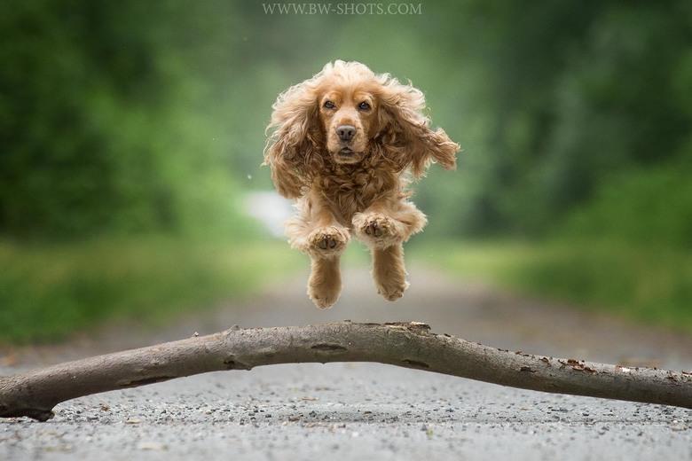 flying Fellow