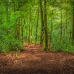 Serene Wood!