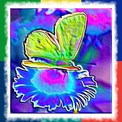 Door vlinder-ogen