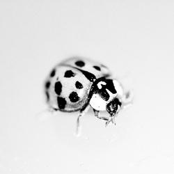 High key ladybug