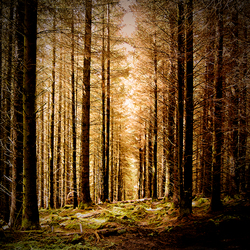 Trees of Scotland