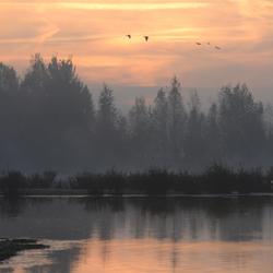 Leikeven in de mist