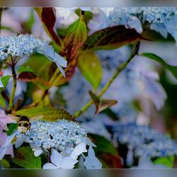 bloemen met beestjes