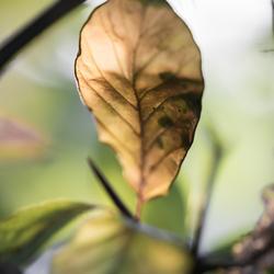 herfstblad aquarel