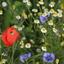 Zuid-Limburgse bloemenpracht