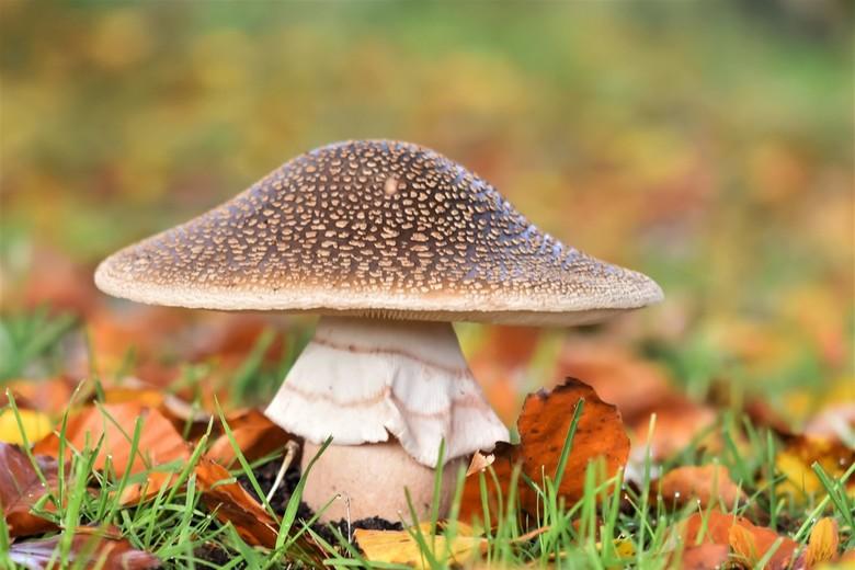 Parelamaniet - of panteramaniet ?(twijfel iets)<br /> blijf nog even in de warme herfst kleuren op deze kille maar gelukkig droge dag.(ligt nog veel