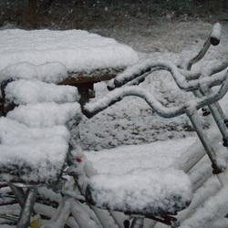 Winterse Veluwe