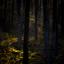 Lichtspoor in het bos