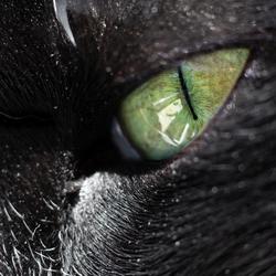 Kattenoog dun lijntje