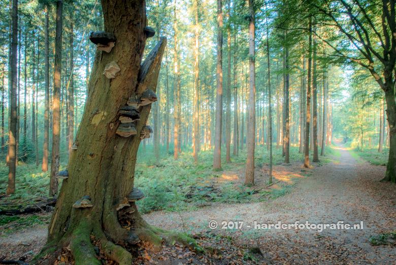 Zonnestralen in het bos - Ook deze foto gemaakt in het Speulderbos of te wel Garderense Duinen.<br /> <br /> Vindt het wel wat hebben die boom met p