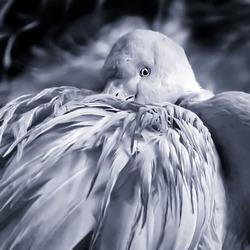 Flamingo 10 zw 72dpi