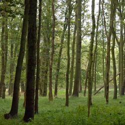 Door de bomen het bos zien