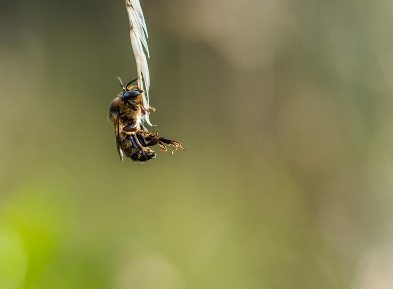 Niet vallen - Zo leuk vanmorgen om deze bij te zijn balanceren onder aan een grasspriet...zeker vergeten dat ze kan vliegen