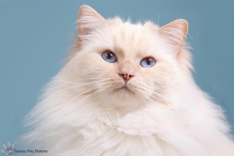 """Famous 'It's so fluffy' - Fluffy Famous <img  src=""""/images/smileys/smile.png""""/> Inmiddels begint hij al te verharen, want ja, waar blijft die winter?<"""