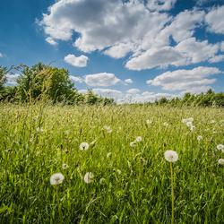 Lang Gras