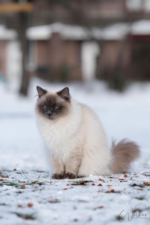 Grumpy Gijsje  - Niet iedereen is zo blij met sneeuw...