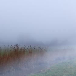 Mist in de sloot