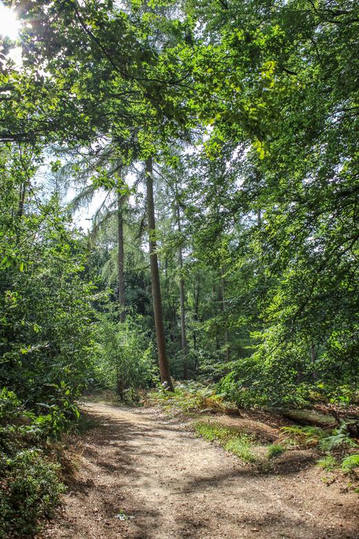 Kijkje in het bos - Montferland Zeddam achterhoek - Foto gemaakt in Zeddam - Montferlandse bossen
