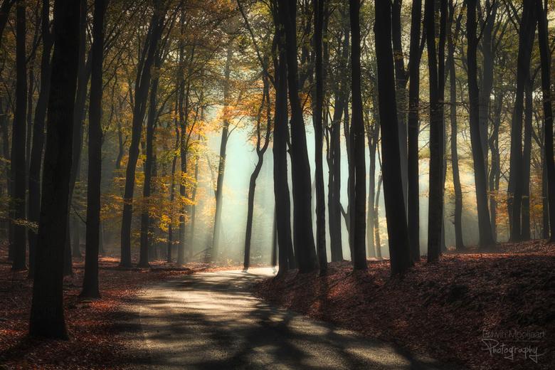 Right, to the light - Mooi zonlicht aan het einde van de weg, met de bomen in de herfstkleuren.