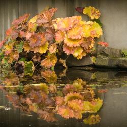 herfst in Arcen