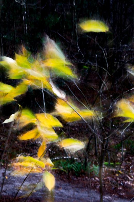 Storm - Storm in het bos