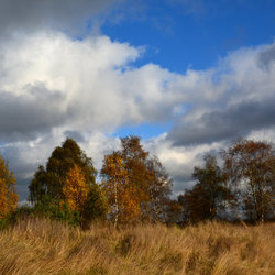 Herfst op de Venlose Heide.