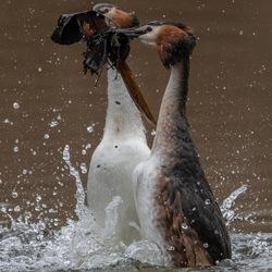 De pinguïn dans