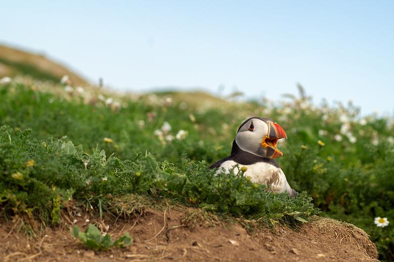 Aandacht - Schreeuw om aandacht en bescherming van het nest.