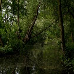 Oerwoud in de polder