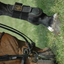 grazend paard op concour