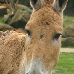 Pretty long-ears!