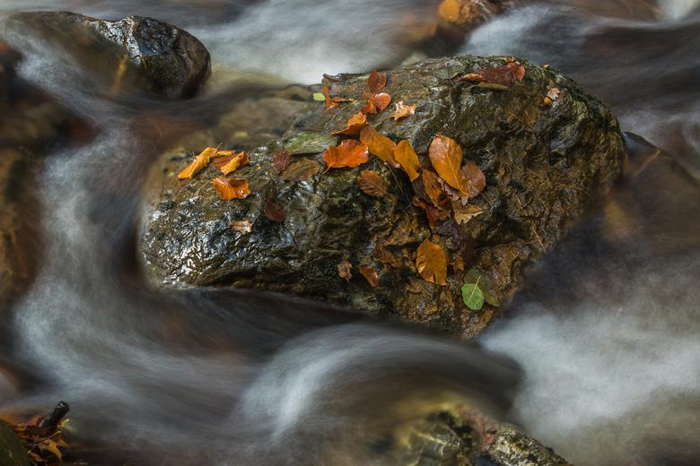 herfst bij de Hoegne - herfst bij de Hoegne stenen water en blaadjes met lange sluitertijd.