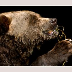 flossende beer