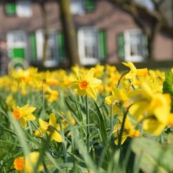 Lente in Rouveen