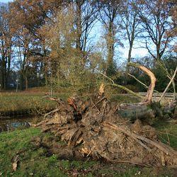Bewerking: Zieke boom