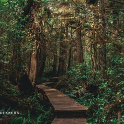 Wildernis op Vancouver Island, Canada