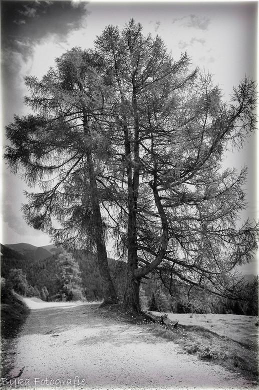 Road En Trees Austria B Amp Amp W Bewerkte Fotografie Foto Van