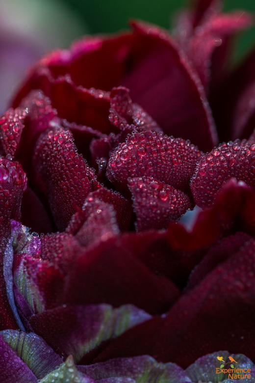 Romantic drops