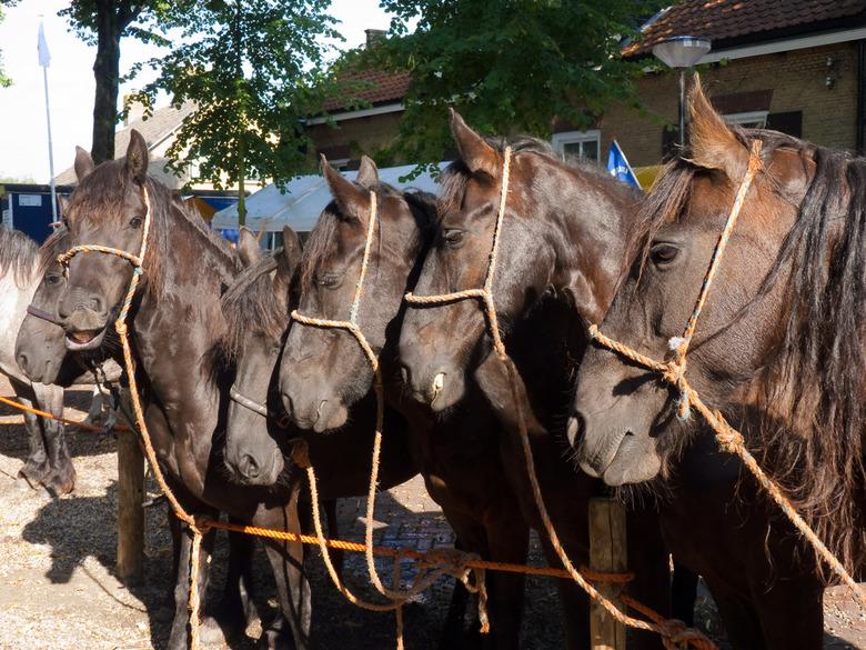 Paardenmarkt Alblasserdam - Paardenmarkt Alblasserdam