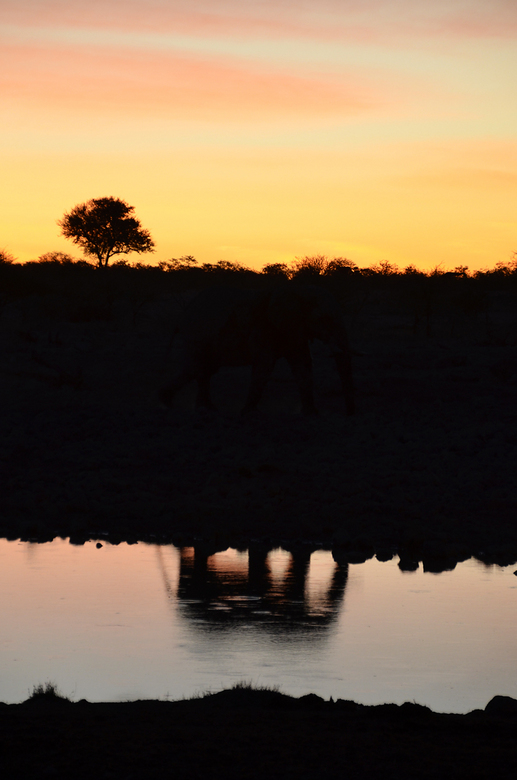 Mystery Elephant