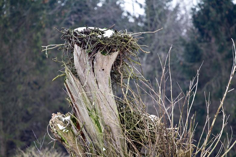 Verlaten? - Deze boom staat al jaren in het Natuurpark, <br /> elk jaar zit er ook een ooievaar op te broeden,<br /> nu is deze nog even onbewoond,<