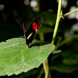 Vlinders aan vliet korting