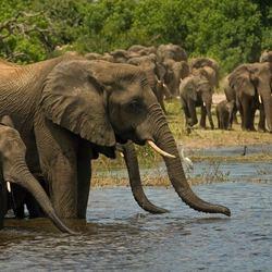 Spitsuur @ Chobe River