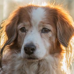 Hondenportret in de zon