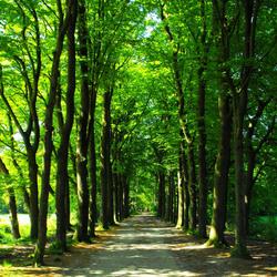 kruisbergse bos aangepast