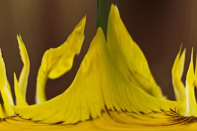 Iris Pseudacorus - Gele Lis (bewerkt)