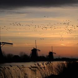 molens en vogels